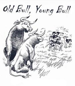 old bull young bulls