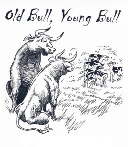 old bull young bulls